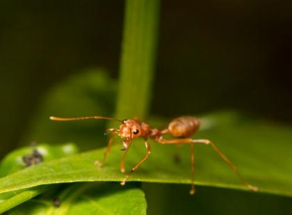 Porada dnia: najskuteczniejsze sposoby na mrówki. Pozbądź się ich szybko!