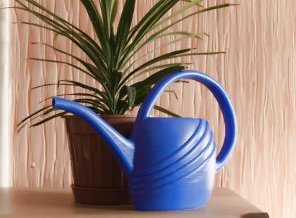 Poradnik: jak przesadzać rośliny doniczkowe?