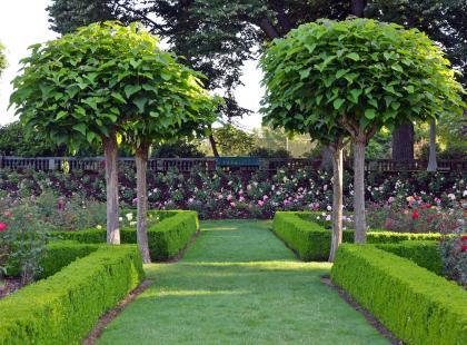 Posadź drzewko przed domem lub na balkonie.  Poznaj kilka pięknych gatunków!