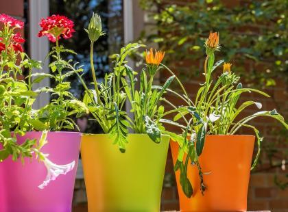 Postaraj się o ozdobne doniczki. Będą ciekawą dekoracją wnętrza lub ogrodu