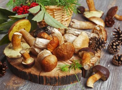 Potrawy z grzybów- 5 najsmaczniejszych pomysłów!