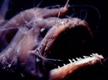 Potwory z morskich głębin