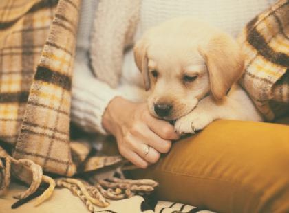 Poznaj najlepsze rasy psów dla dzieci. To będzie najlepszy przyjaciel twojego malucha!
