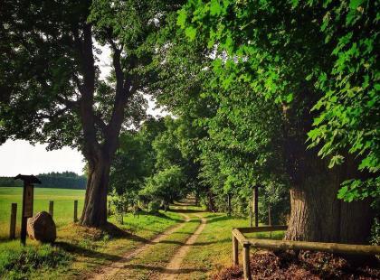Poznaj popularne polskie drzewa! Oto 5 gatunków