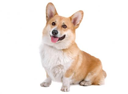 Poznanie z psem – scenariusz zajęć zooterapii