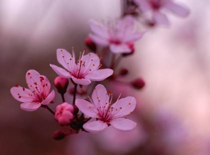 Prace ogrodnicze na kwiecień