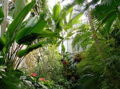 Prawdziwa miejska dżungla