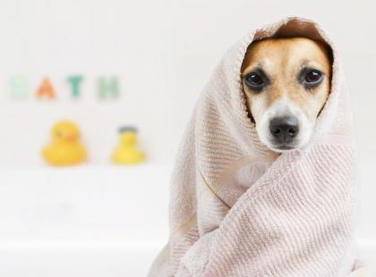 Prawidłowa pielęgnacja psa