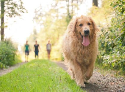 Preparaty przeciw kleszczom dla psów - wybór