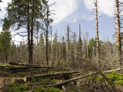 Przerażający film z okolic Suszka. Burza dosłownie zmiotła kilkadziesiąt hektarów lasu!