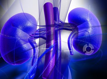 Przeszczep nerki od żywego lub zmarłego dawcy – co jest lepsze dla biorcy?