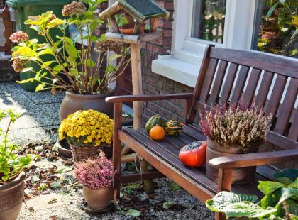 Przygotuj rośliny do zimy!
