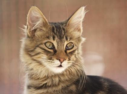 Przypowieść o kotce