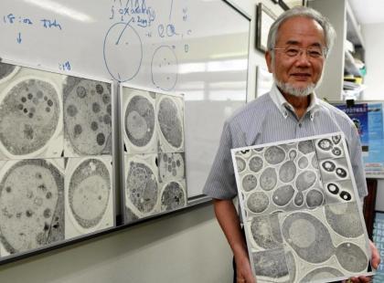 Przyznano Nobla z medycyny. Otrzymał go japoński profesor za odkrycie mechanizmu autofagii, czyli recyklingu komórek!