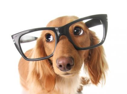 Psia cukrzyca – jak wygląda i czym się objawia?