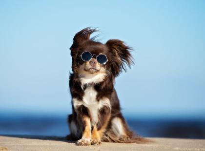 Młodzieńczy Rasy psów bez tajemnic - wielka encyklopedia psów! Poznaj ich DI28