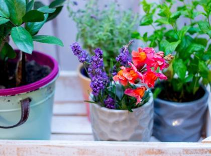 Ratunku! Ziemia w doniczkach moich kwiatów robi się biała!