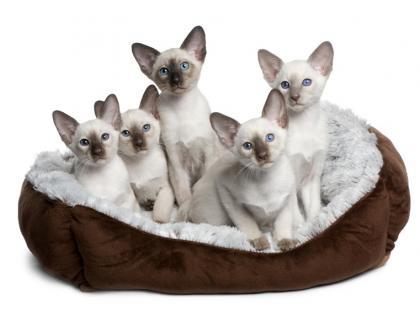 Ropna wydzielina z oczu kota - czy to koci katar?
