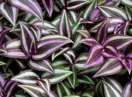 Roślina, którą może hodować twoje dziecko w swoim pokoju. Nie alergizuje i jest łatwa w uprawie