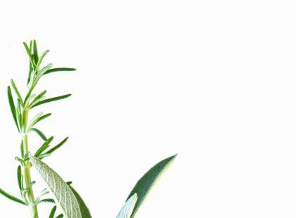 Roślinne leki uspokajające