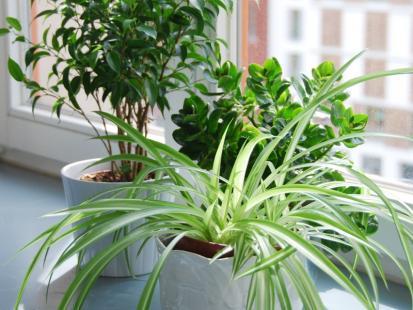 Rośliny doniczkowe mogą być piękne także zimą