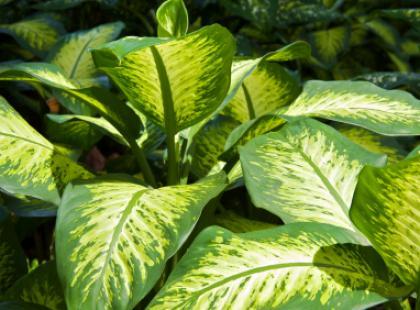 Rosliny doniczkowe wystylizują Twój dom
