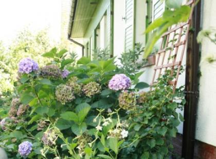Rustykalny ogród krok po kroku