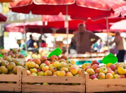 Rząd popiera CETA? Czy to znaczy, że mówimy tak GMO?
