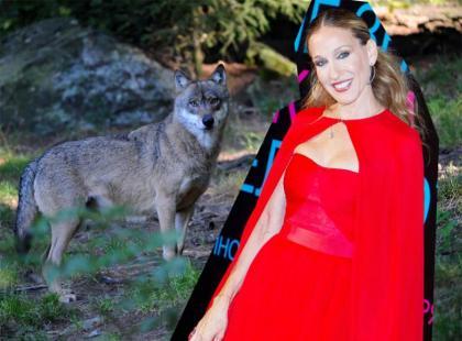 Sarrah Jessica Parker - współczesny Czerwony Kapturek