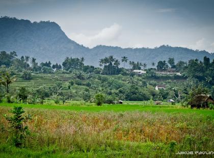 Słodko-gorzki kąsek Indonezji