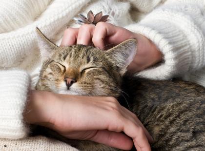 Słynni właściciele kotów