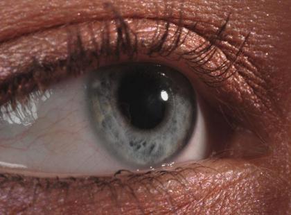 Sokoli wzrok