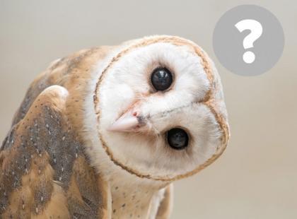 Sowy tak naprawdę nie są mądre?! Poznaj 13 mitów o zwierzętach, w które wierzymy!