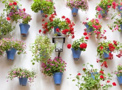 Stwórz w domu lub na zewnątrz podniebny ogródek w donicach wiszących
