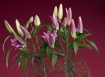 Świat lilii