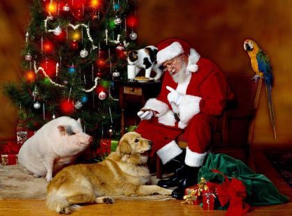 Świąteczny prezent dla psa i kota