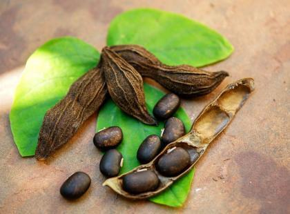 Świerzbiec właściwy – naturalny lek na chorobę Parkinsona?