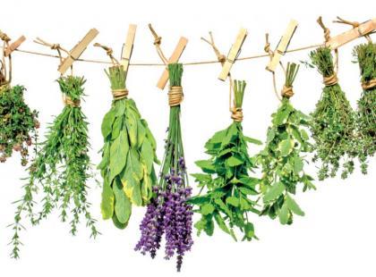 Świeże zioła najlepsze dla zdrowia