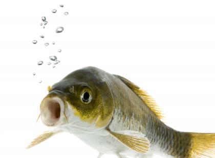 Tabela kalorii – ryby