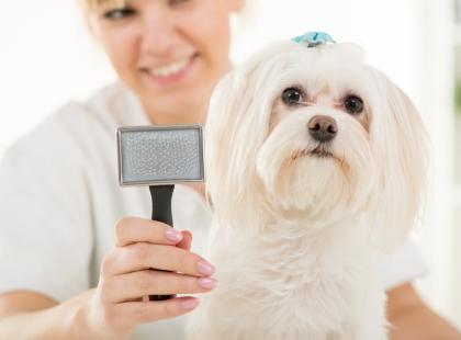 Taki przybornik warto mieć, jeśli się ma długowłosego psa. Jego futro będzie wzbudzało podziw