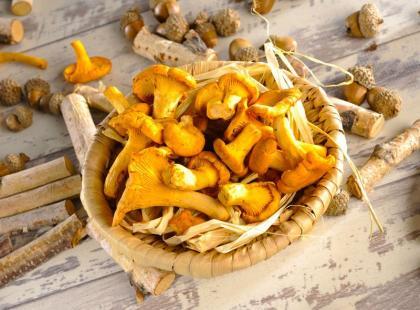 Te grzyby zbieraj bez obaw! Spis grzybów jadalnych, które znajdziesz w polskich lasach!