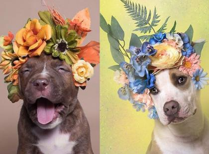 Te psy szukają nowego domu. Czy chcesz się nimi zaopiekować?