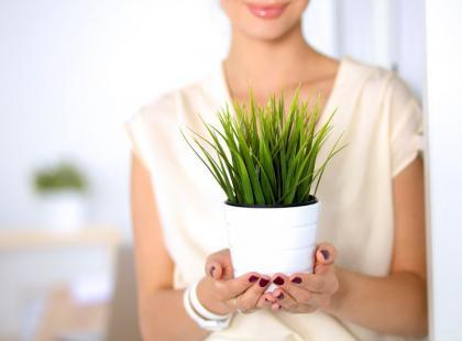 Te rośliny mogąbyć niebezpieczne! Poznaj 8 popularnych gatunków roślin trujących