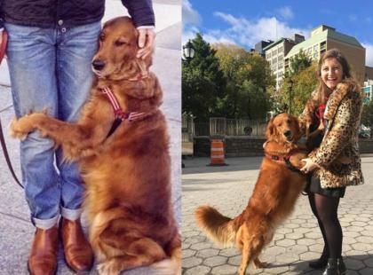 Ten pies to lek na wszelkie zło. Zobaczcie, jak przytula się do przechodniów na ulicy!