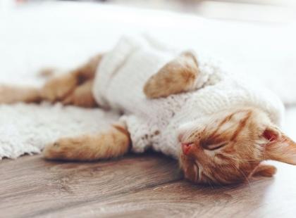 Też to znasz? 7 faktów, które zrozumieją tylko ci, którzy mają w domu zwierzęta