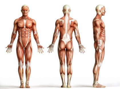 Tłuszcz kontra mięśnie, czyli kilka słów o typach sylwetki