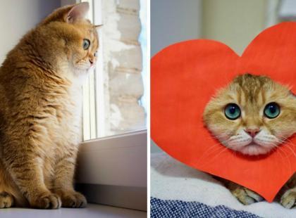 To najbardziej fotogeniczny kot, jakiego kiedykolwiek widziałyśmy!