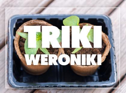 Triki Weroniki: Jak domowymi sposobami nawozić rośliny doniczkowe?