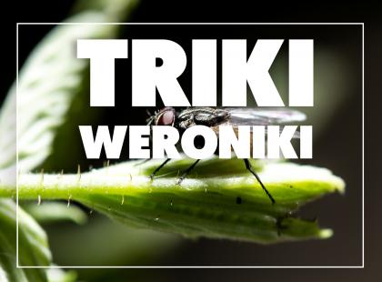 Triki Weroniki: Jak odstraszyć muchy?