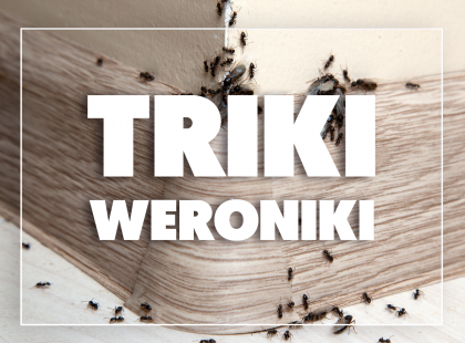 Triki Weroniki: Jak pozbyć się mrówek z domu?